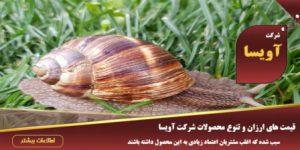 خرید و فروش و سفارش حلزون اسکارگو در تهران و اصفهان و اهواز و شیراز و مشهد
